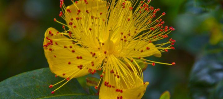 Exotic Yellow