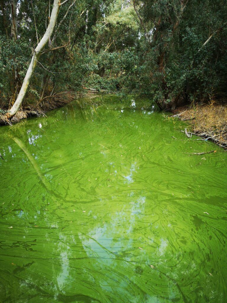 the_swamp